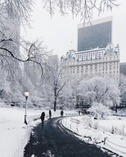 winter-activities-to-do-in-central-park